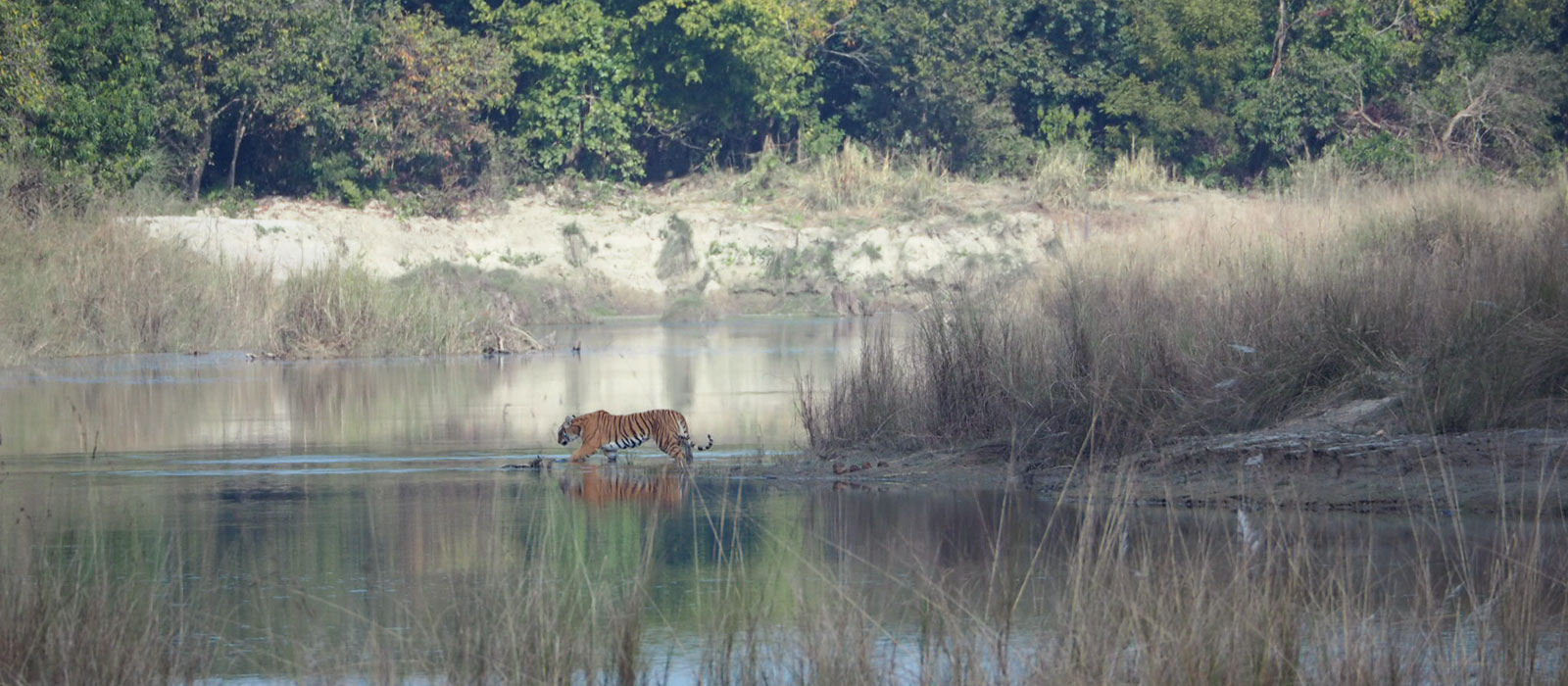 Tiger tracking tour in Bardia